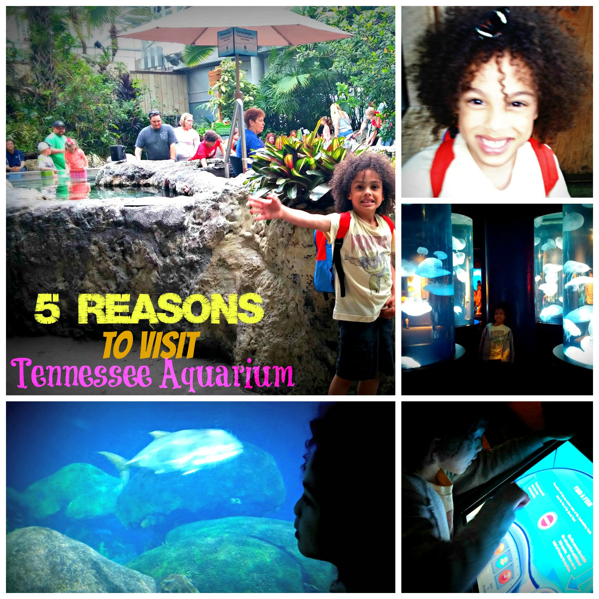 5 Reasons to visit Tennessee Aquarium